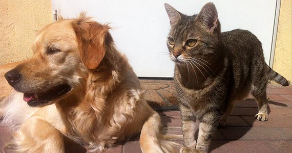 dog-cat-desexing