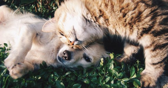 How to manage arthritis in your pets. Advice from Port Road Vet for your cats and dogs.
