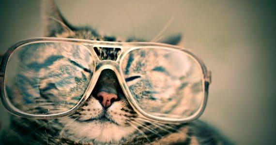 cat fun facts, port road vet adelaide