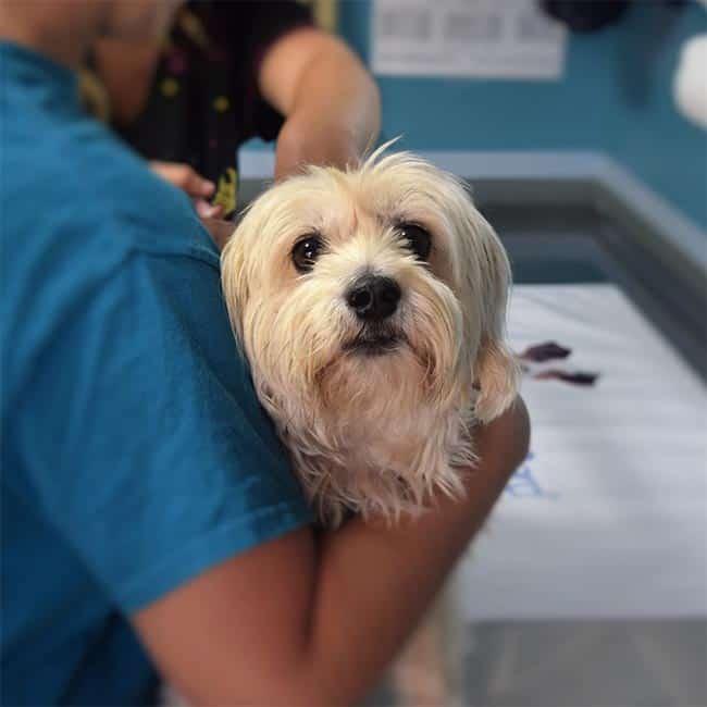Vet holding cute dog. Affordable Adelaide vet clinic
