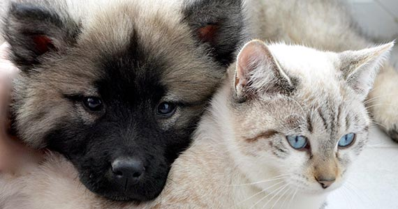 Dog and Cat cuddled together. Good pet nutrition is essential for optimal health