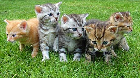 Caring for your cat. Five cute kittens