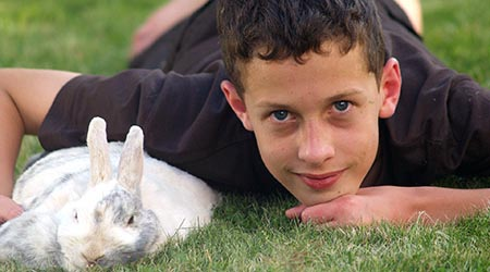 Vet specialising in small pets. Rabbit and boy