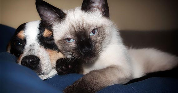Grey cat and cute dog. Choose the right pet insurance plans for peace of mind.