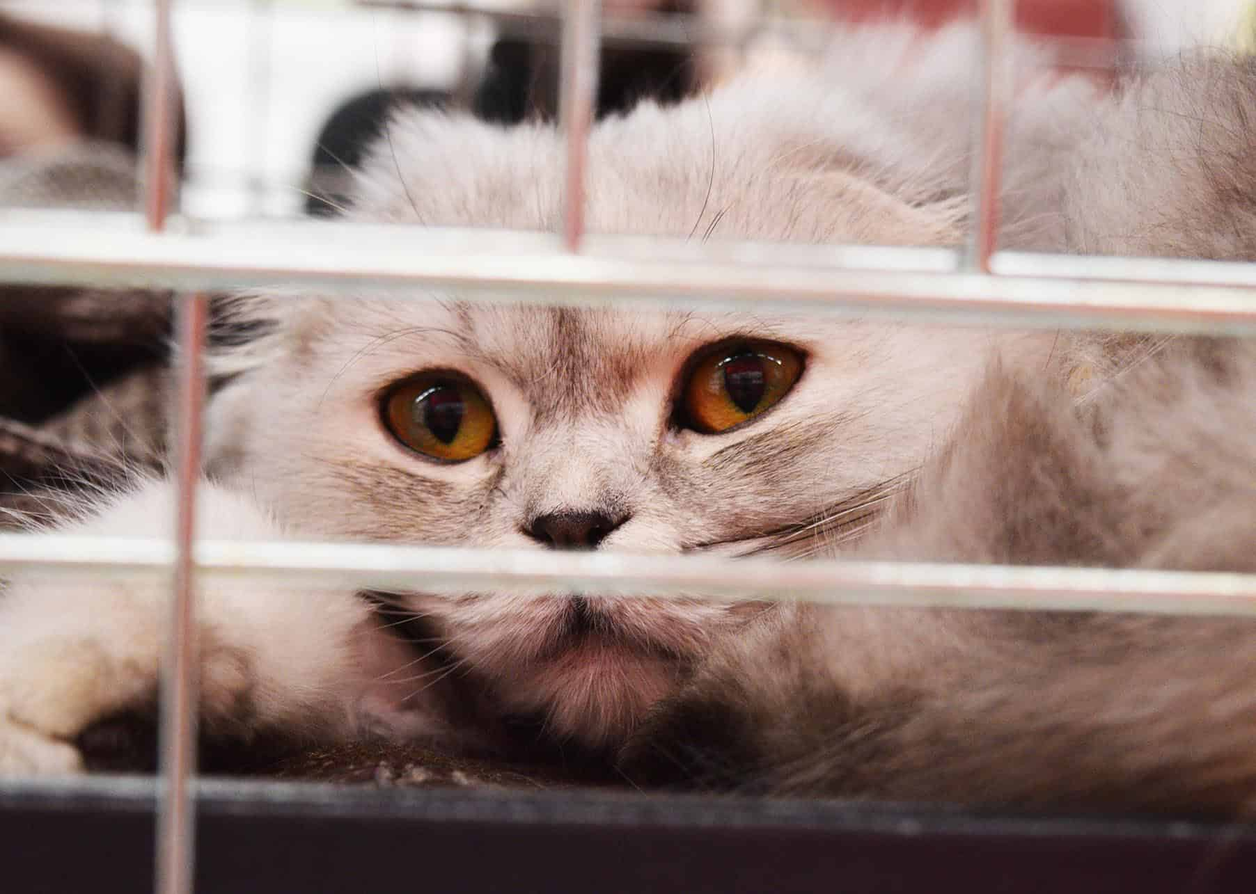 Cat in cage, ready to go to the vet by car