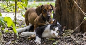 Port Road dog and cat Vet
