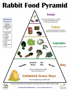 Rabbit diet food pyramid