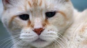 Cat with osteoarthritis