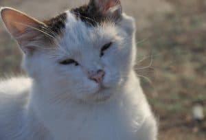 Cat dementia, port road vet