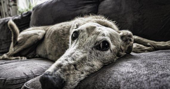 Arthritis in pets, port road vet