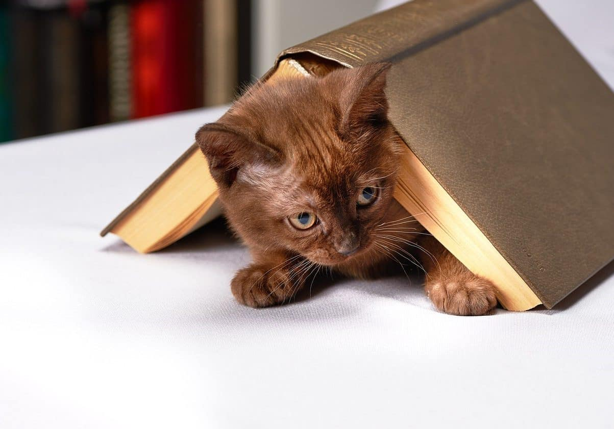 Cat crouching under open book. Find out fun facts about cats.
