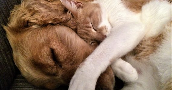 Dog asleep. Dog and cat facts for kids