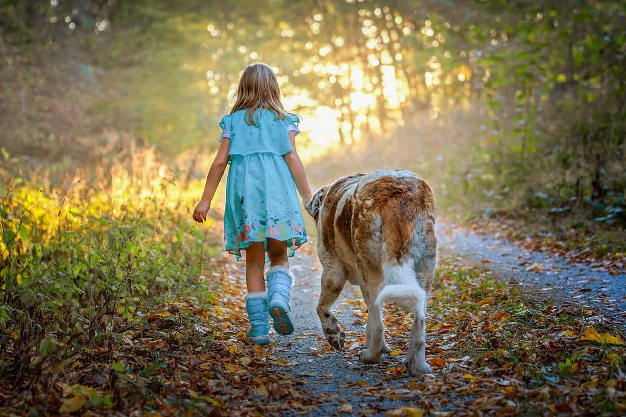 Young girl walking with St Bernard dog. Teaching dog safety for children is important